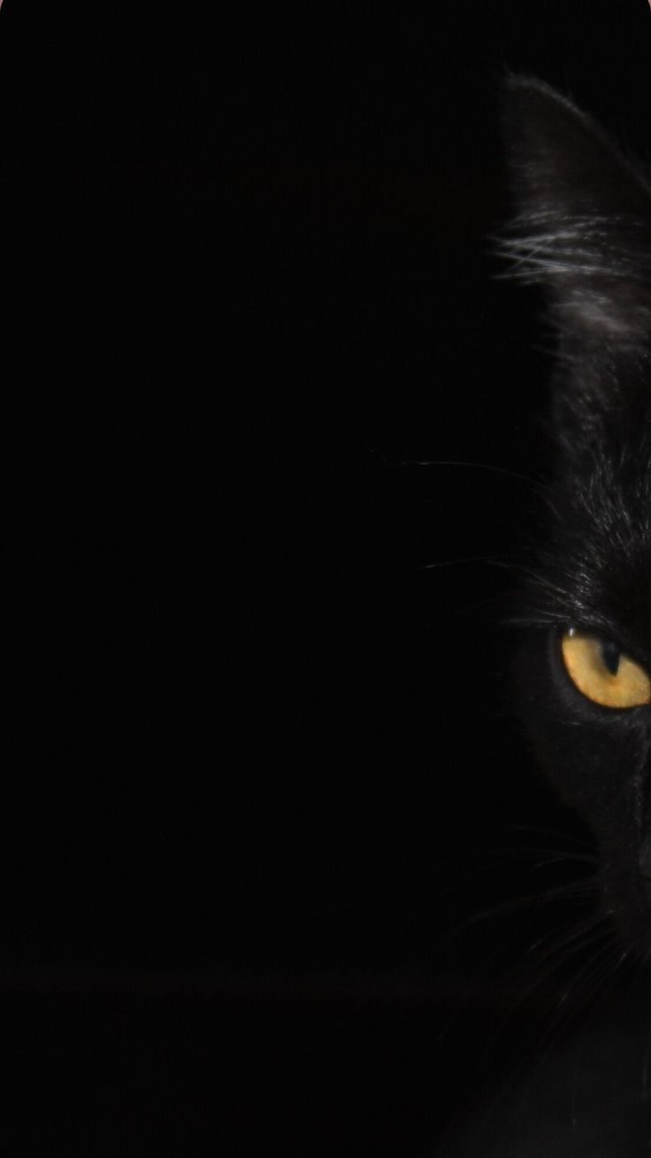 Pin On Cute Black Cats