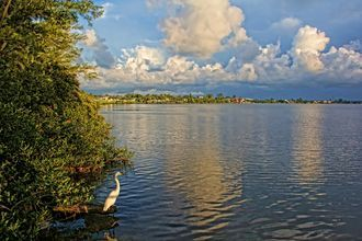 Morning Walk by HH Photography of Florida / Original fine art photography.  A Great Egret (Ardea alba) out for a morning wa
