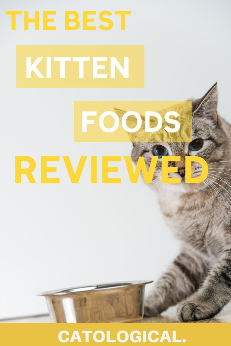 Best Kitten Food For Healthy Baby Cats Reviews Of Top Wet Dry Brands With Images Kitten Food Kitten Food Brands Cat Care
