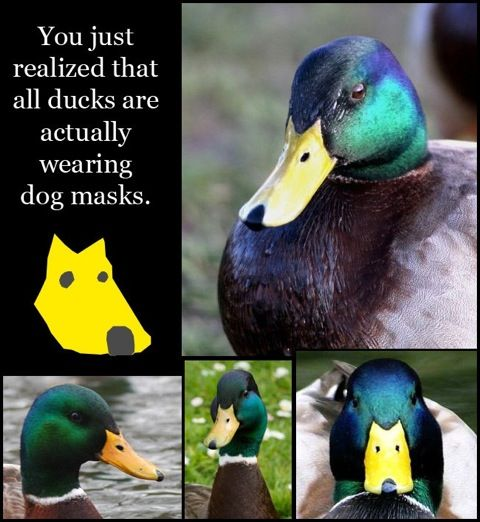 Thank you internet.  Now I will never look at a duck the same.Wear Dogs, Mindfulness Blown, Ducks, Funny Stuff, Dogs Masks, Funny Commercials, Dogs Funny, Animal, Dogs Face