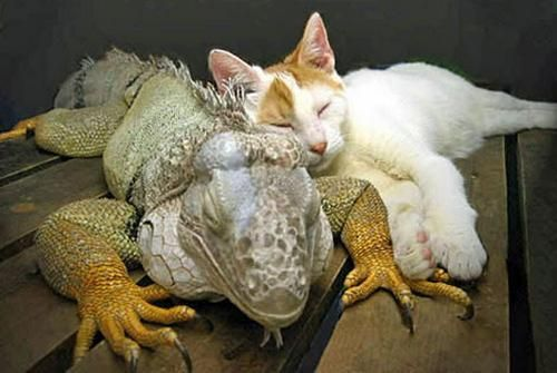 * Unlikely Animal Friends   ...........click here to find out more     http://googydog.com