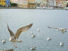 Insel Losinj - Kroatien - Kvarner Bucht