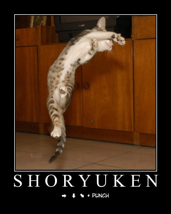 Shoryuken - funny pictures - funny photos - funny images - funny