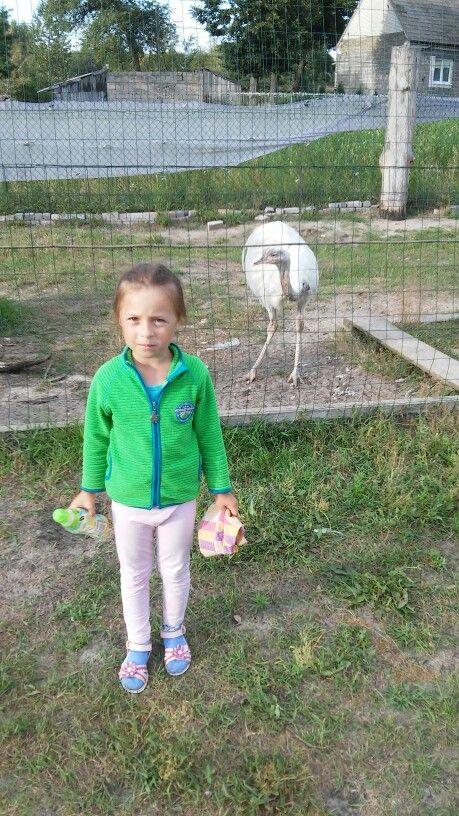 30.07.2016 zoo wygoda