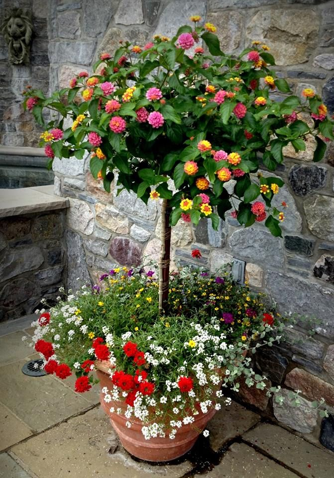 lantana tree!!!! I will create and own something very similar to this next year no lie!