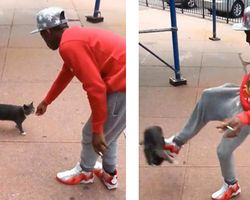 Punish Andre Robinson, Man Accused of Kicking Stray Cat in Brooklyn, NY to Full Extent of the Law. Andre, 21, is seen laughing as he lures the unsuspecting kitty toward him before he kicks it with full force, sending it flying 20 feet through the air. Video of the vicious May 2 act was posted on Facebook & circulated for several days before cops arrested Robinson on Monday. He has eight prior arrests, including one for knife point robbery.""