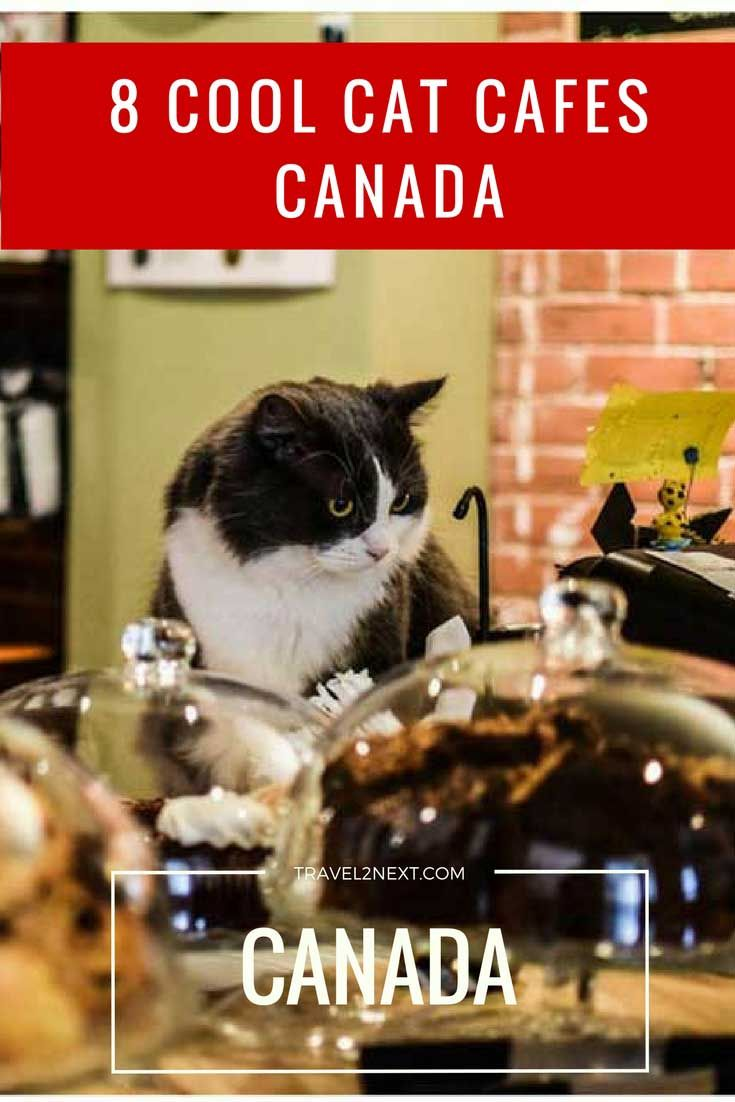 8 Cool Cat Cafes in Canada http://travel2next.com/8-cool-cat-cafe-canada/?utm_campaign=coschedule&utm_source=pinterest&utm_medium=Travel%202%20Next&utm_content=8%20Cool%20Cat%20Cafes%20in%20Canada