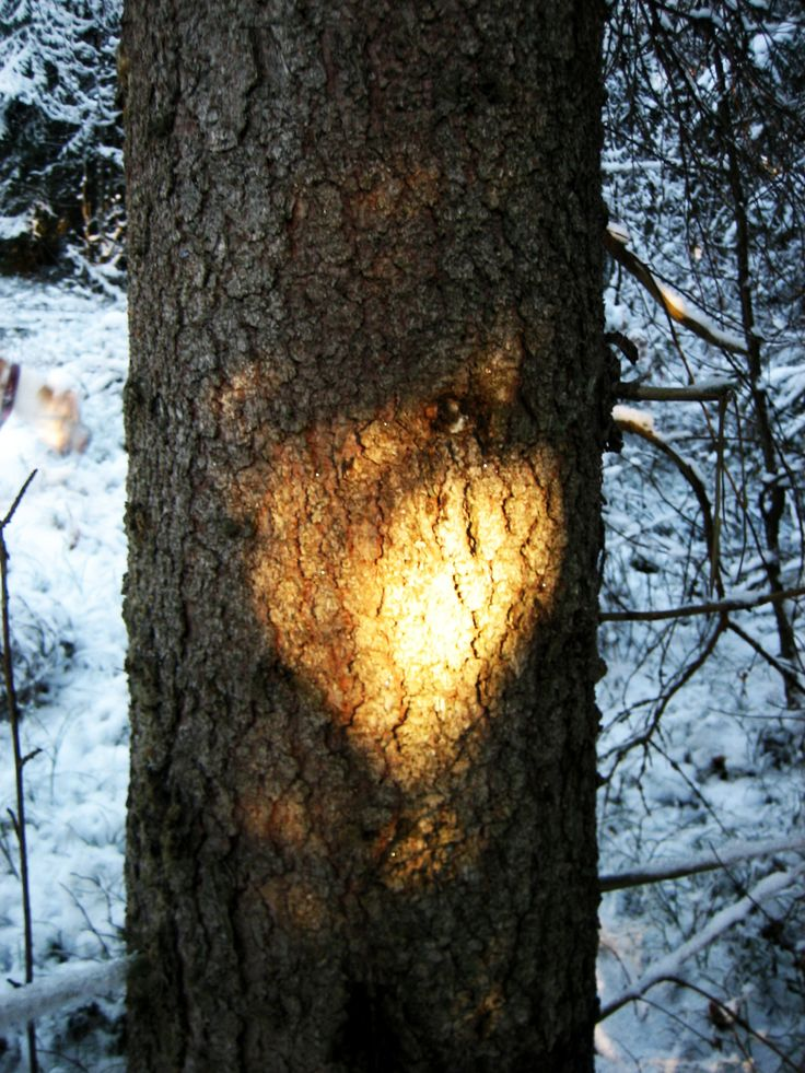 heart on the pine, a short moment