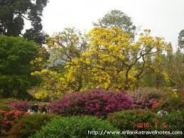 Botanical garden in srilanka.more information about tour in srilanka.contact us.susantha2803@gmail.com