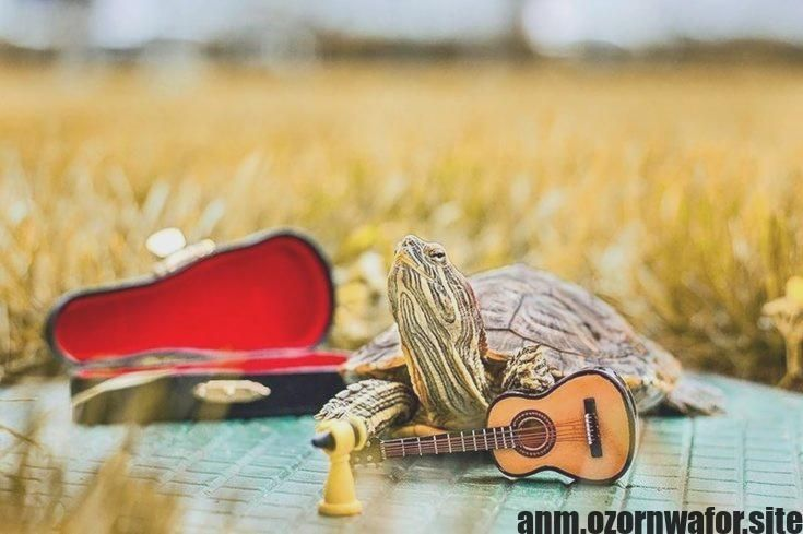 Hottest No Cost Turtles Pet red eared slider Thoughts ...