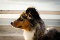 Die Liste der Verfehlungen von Hundehaltern ist lang. Wir fassen die 7 Todsünden des Hundehalters zusammen. [Vorsicht: Bissig]
