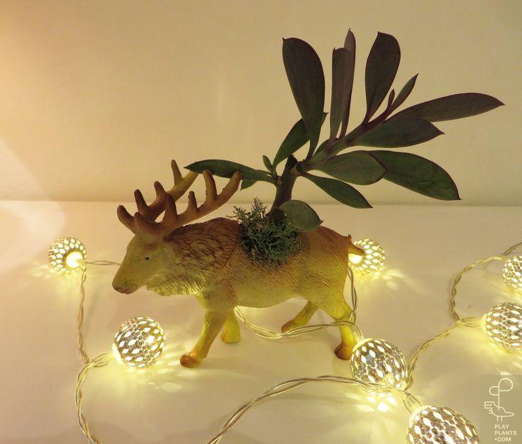Reindeer // M