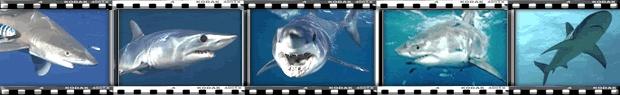 Apex Predators - Shark Bites Newsletter
