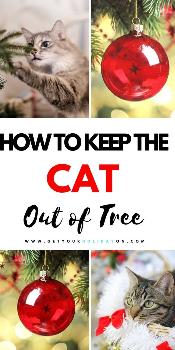 How To Keep Your Cat Out of The Christmas Tree Get Your