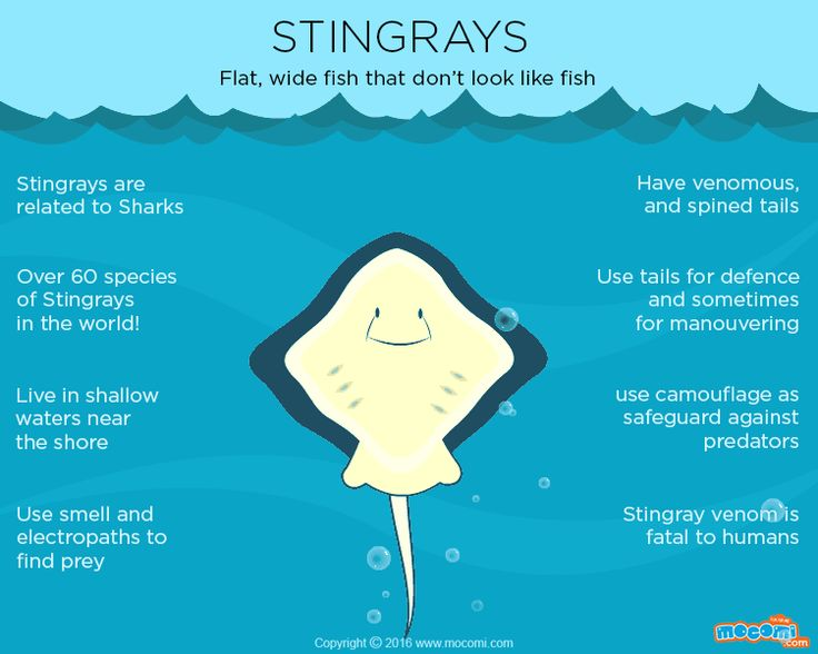 649 best images about ocean lesson plans on pinterest for Fish facts for kids