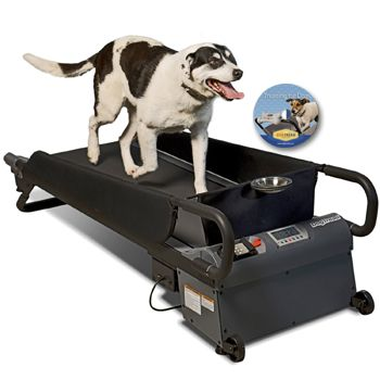 Dog Treadmill Training Program