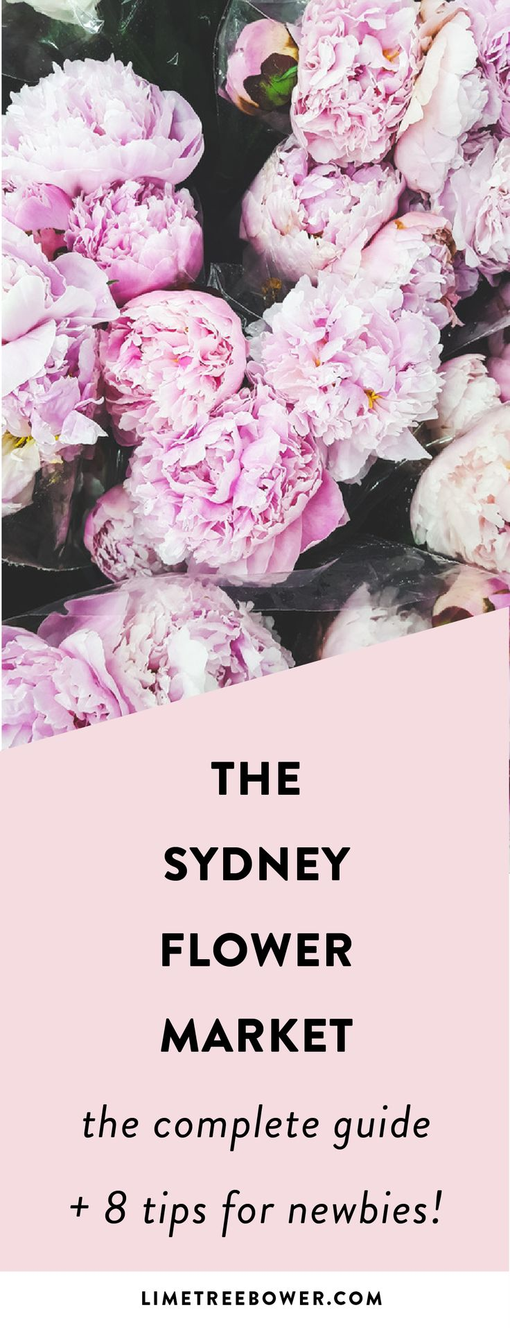 Sydney Flower Market Guide   Free Guide to the Sydney Flower Market for Beginners   Sydney Australia Flower Market   Lime Tree Bower