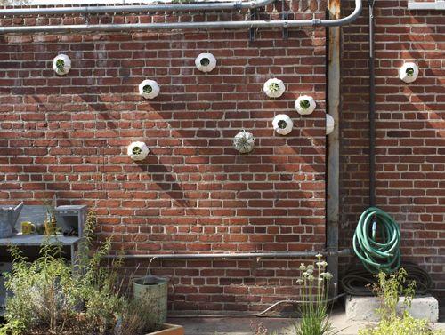 Wall Barnacles   BLANK SLATE – GARDEN WALLS