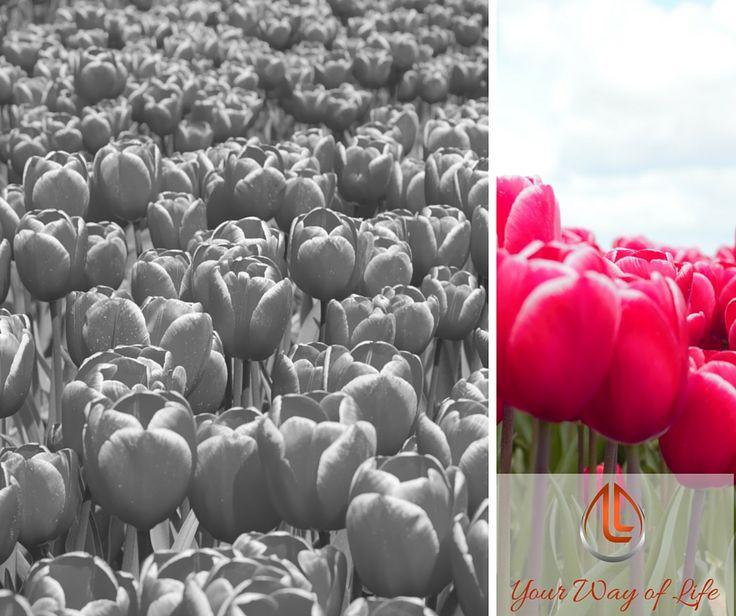 Lieve #WomenofToday, het seizoen van licht, ruimte, buiten, openheid en good feeling lijkt geopend. Bij ons in de regio wordt de lente, nieuw leven in de natuur en de tijd van bloei o.a. zichtbaar in het aantal ontelbare bloembedden in de polder. Hoe mooi is dat? Alle kleuren; voor ieder wat wils. Waar geniet jij van bij dit zomerse weer? Mooie foto om in deze canva te plaatsen? Mail hem naar Sluitjeaan@gmail.com