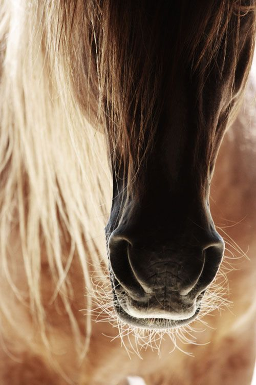 Everything about horses is magnificent.