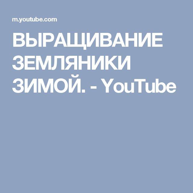 ВЫРАЩИВАНИЕ ЗЕМЛЯНИКИ ЗИМОЙ. - YouTube