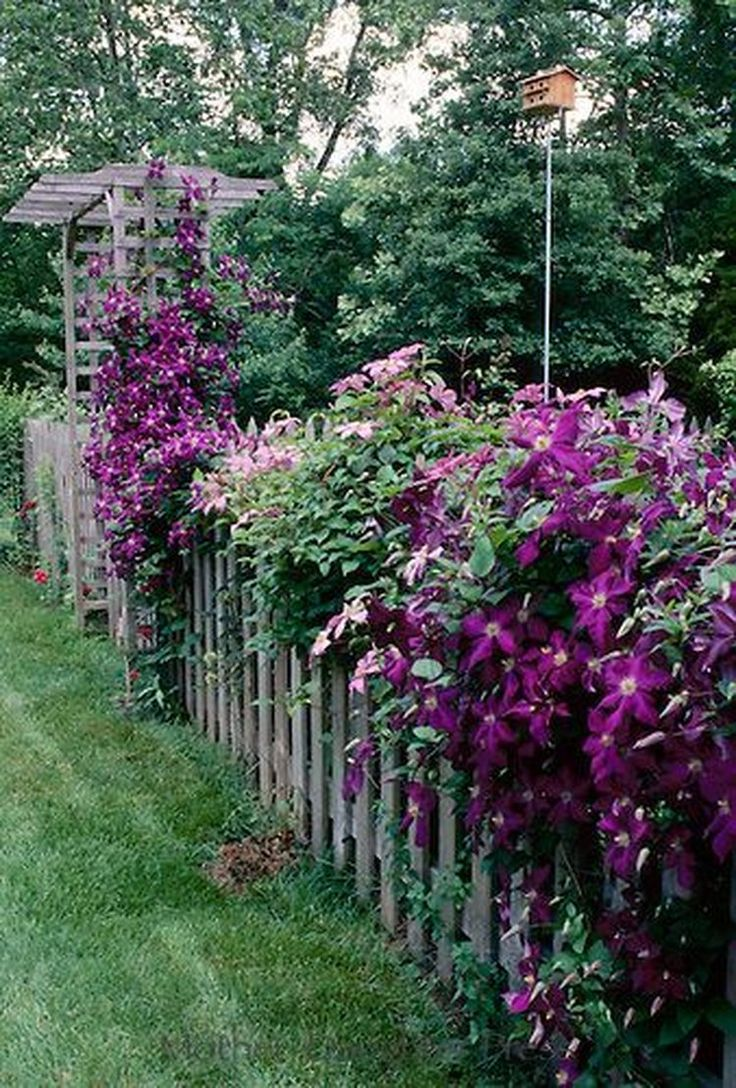omg, this clematis covered arbor and fence is amazing