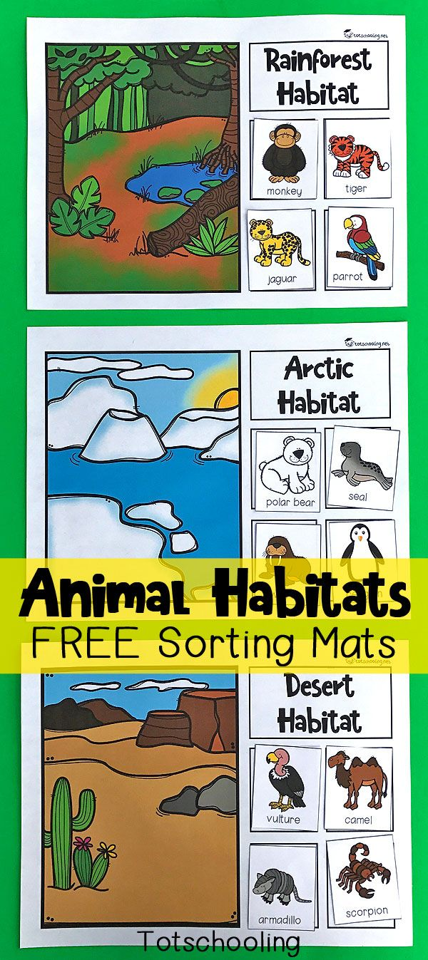 FREE printable sorting mats for preschoolers and kindergarten kids to learn about animals and their habitats. Great science and nature activity that kids will love! Includes rainforest, ocean, desert, arctic, woodland and wetland habitats.