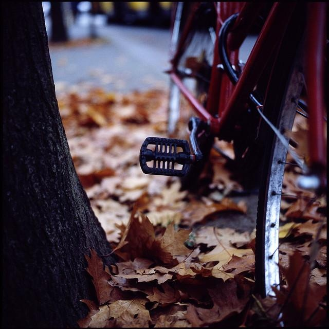 Fall & bicycles-another perfect combination :)
