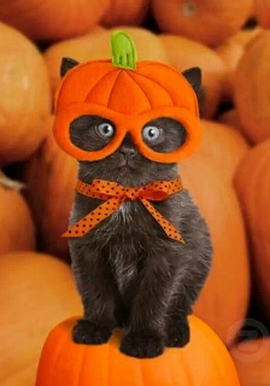 "* * "" I hates Halloweenz, candy, and nowz I hates YOO."""