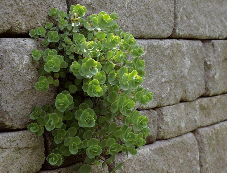Good Gartenmauern Haus Und Garten Magazin