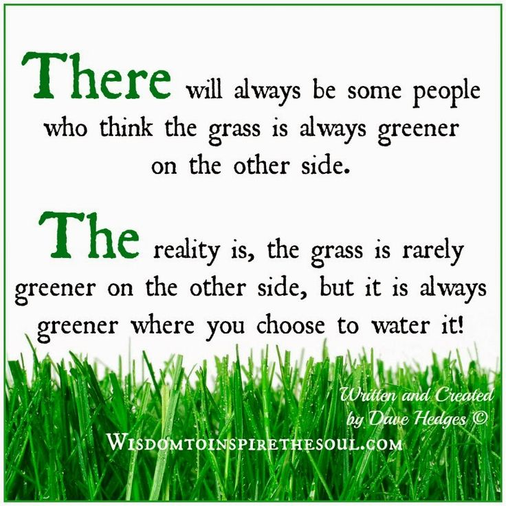 how to get your grass greener and thicker