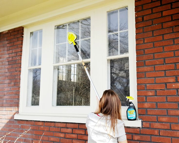 30 Best Window Cleaning Tips Images On Pinterest