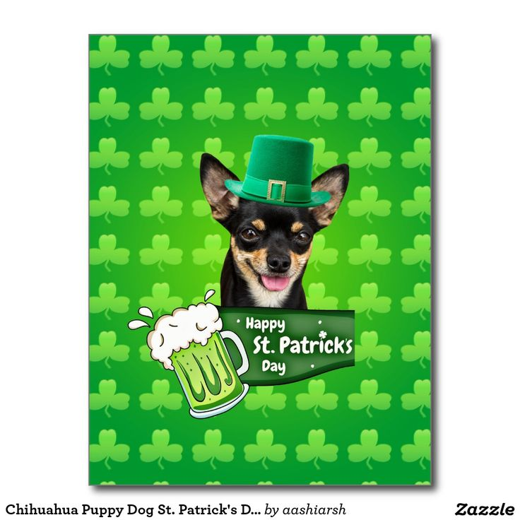 #Chihuahua #Puppy #Dog St. Patrick's Day Green #Clover #Postcard #Irish