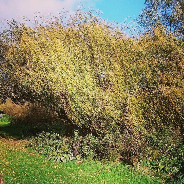 #Worcester #willow #riverside #severn