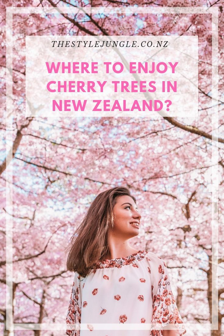 Enjoy The Cherry Blossom Season In New Zealand Thestylejungle Lifestyle And Travel Blog Cherry Blossom Season Travel Blog New Zealand