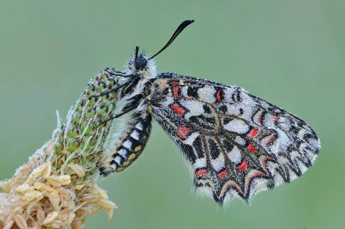 Hoe fotografeer je vlinders? 's Ochtends wachten vlinders op de zon om de dauw op hun vleugels te doen opdrogen. Je kunt hen dan makkelijk benaderen. (f/16, 1/13, ISO 200, 200 mm macro)