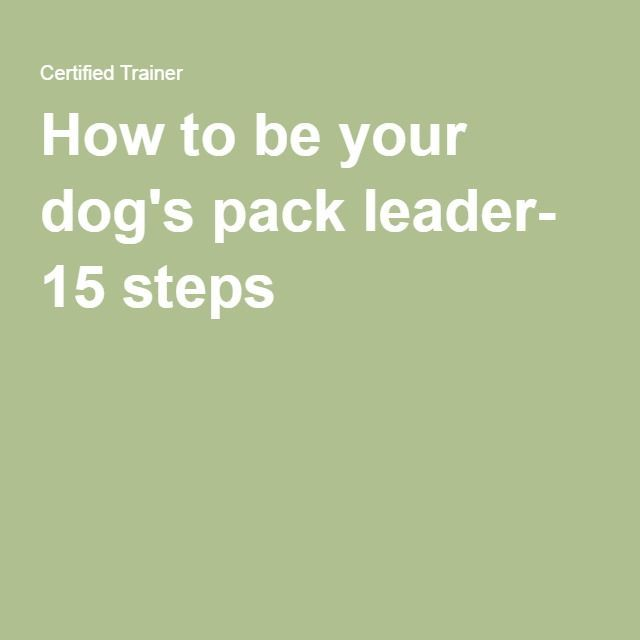 How to be your dog's pack leader- 15 steps
