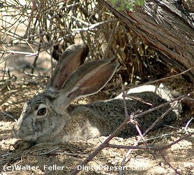 Flora & Fauna of the Mojave Preserve