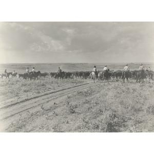 """The """"drag"""" (end of trail herd) moving along a trail., Erwin E. Smith, 1910, Dallas Museum of Art,: Trail Herd"""