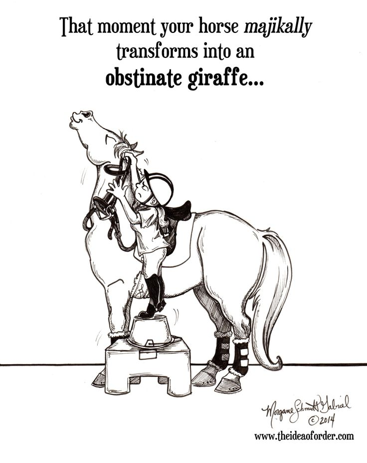 No matter how tall you are, or how short your horse is, he can become a giraffe.  They can ALL BECOME GIRAFFES.  I find this highly annoying; as usual my horses are please with themselves.