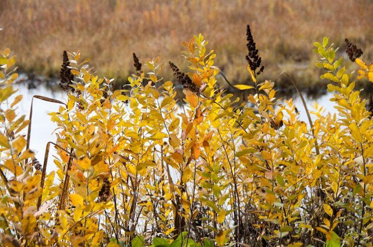 Colorful shrubs along pond