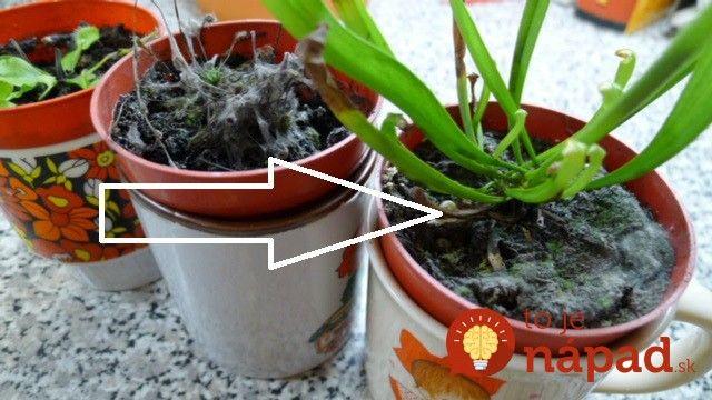 Objavil sa vám v kvetináči biely povlak? Takto rastlinky zachránite a budete mať doma opäť čistý vzduch!