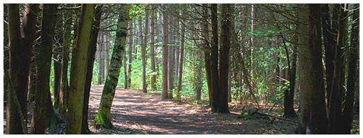 Pinhey Forest Trails | Ontario Trails Council