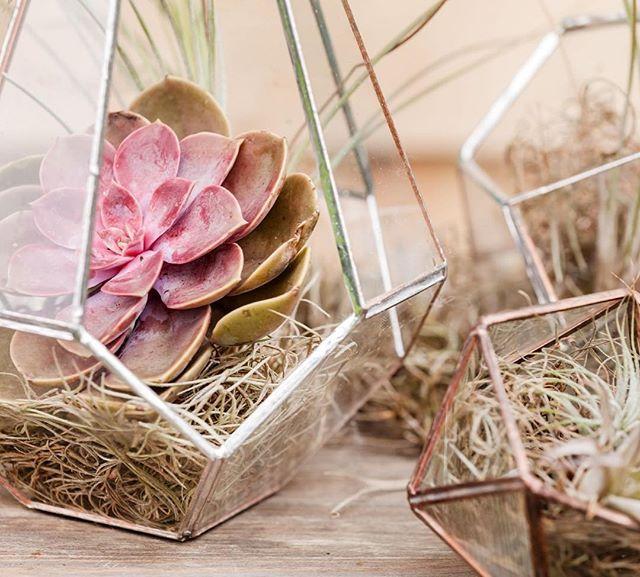 ¡Hoy os traemos un DIY de lo mas sencillo! Solo necesitas una bonita selección de plantas suculentas y un original recipiente de cristal.⠀ ¡Ya puedes crea tu propio terrario!⠀🌷🌸 ⠀ ---⠀ ⠀ Today we bring you a DIY! You just need a nice selection of succulent plants and an original glass pot.⠀ You can create your own terrarium!⠀@bassols_1790