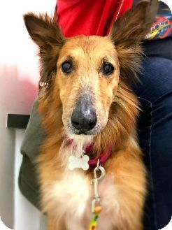 Best Place To Adopt A Dog Near Me
