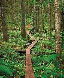Herajärvi Trial - Koli national park