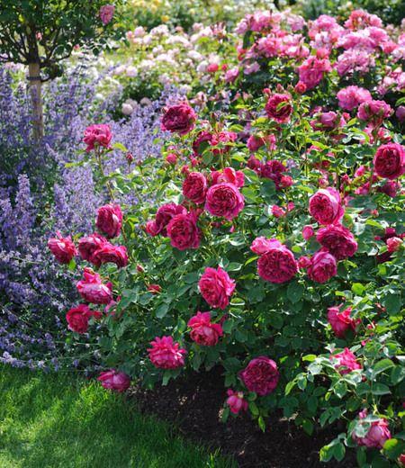14 best The Garden images on Pinterest | Garden ideas, Backyard ...