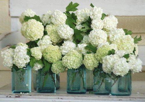 rehearsal: Ball Jars, Blue Mason Jars, Ideas, Hydrangeas Centerpieces, White Flower, Canning Jars, Flower Arrangements, Mason Jars Centerpieces, White Hydrangeas