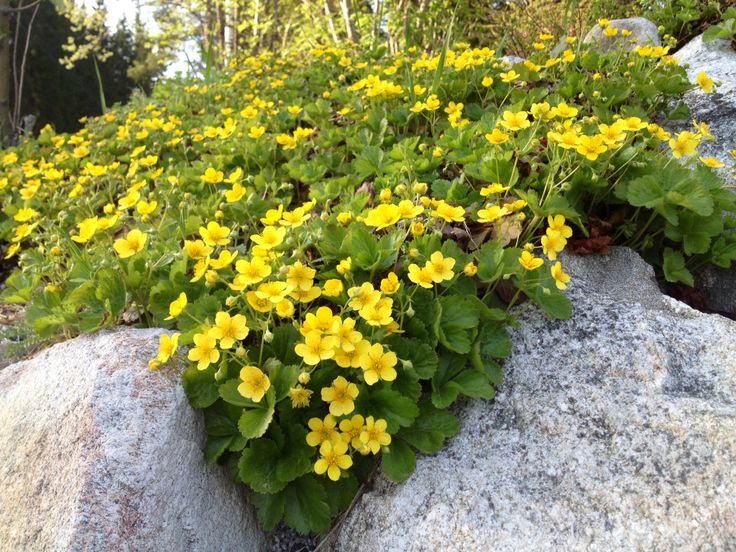 #rönsyansikka#garden