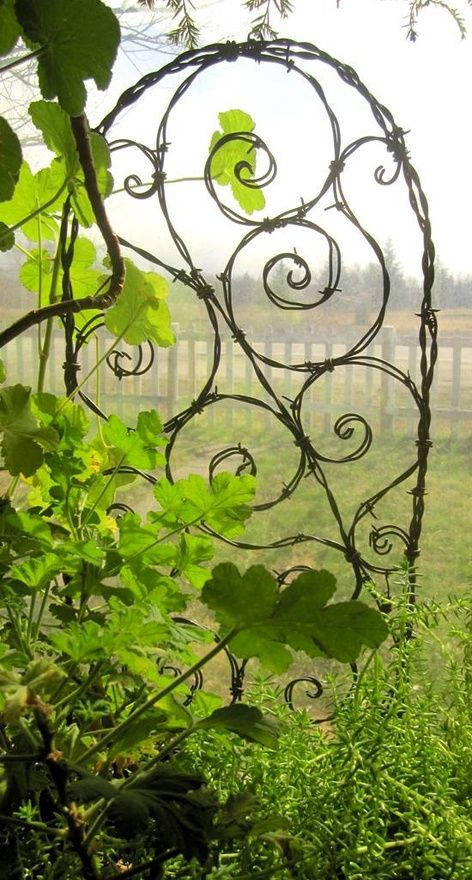 Barbed wire trellis - love it!